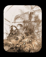 Image of View in the Palm Tower of the Main Conservatory (1868-1916).