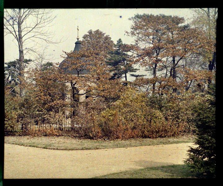 Image of Sassafras growing along the Mausoleum fence.  Color magic lantern slide.