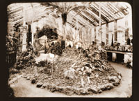 Image of Fern house.  In center is giant Todea barbara.
