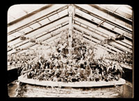 Image of Cold part of Orchid House.