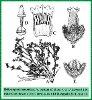 Heliotropium lamondiae Kazmi (Illustration)